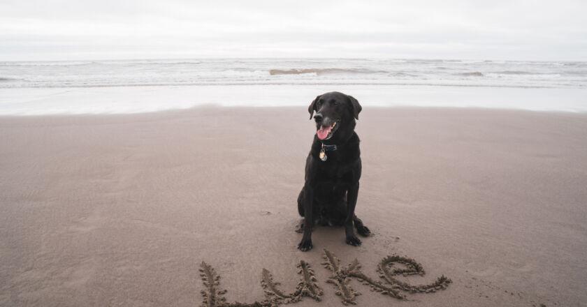 köpek isimleri nasıl seçilir