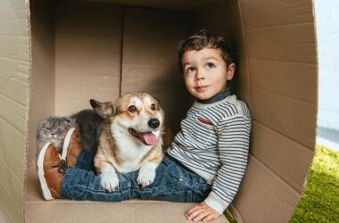 çocuklara hayvan sevgisi vermek